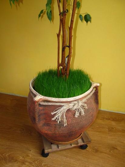 Трава в вазоне, большой горшок