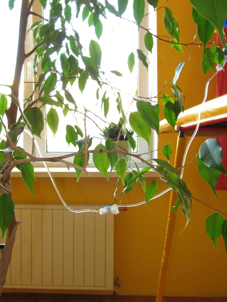 Капельный полив своими руками для комнатных цветов фото 820